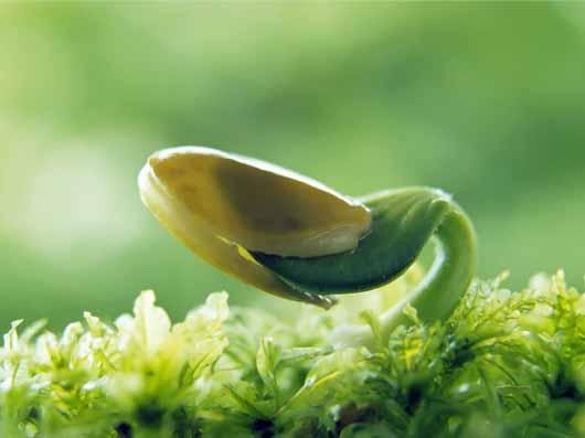 طریقه جوانه زدن و سبز كردن سبزیجات