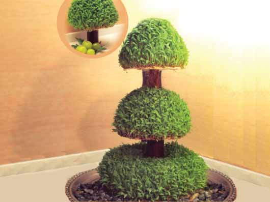 سبزه به شکل درخت مطبق