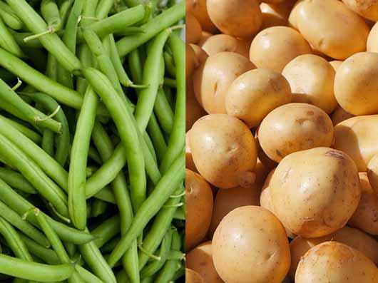 کاشت لوبیا سبز و سیب زمینی در خانه
