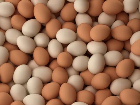 سایه روشنهای تخم مرغ (1)
