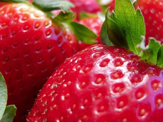 طریقه کاشت توت فرنگی