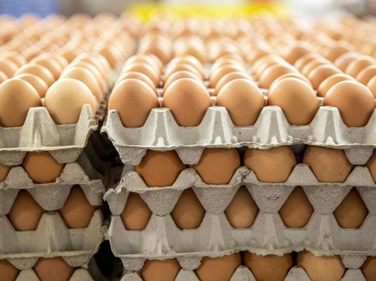 سايه روشن های تخم مرغ (2)