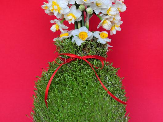 سبزه بذر شاهی روی كوزه