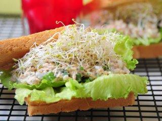 ساندویچ ماهی تن و جوانه